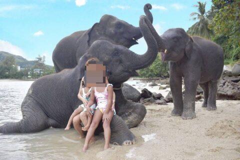 象さんビーチはプーケット観光の新定番!エレファントスイムで記念撮影