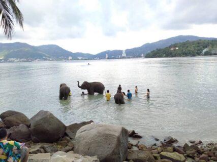 象さんビーチはプーケット観光の新定番!エレファントスイムの待ち時間
